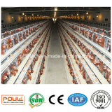 Usine de cage de poulet produisant des cages pour des fermes de couche