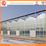 PC Blatt-/Glas-/Plastikfilm-galvanisiertes Rohr-grünes Haus für Erdbeere/Rose