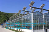 직접 가장 싼 필름 온실/Venlo 온실을 판매하는 공장