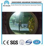 Proyecto de acrílico transparente modificado para requisitos particulares del tarro de los pescados