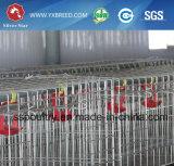 Горячий контейнер цыпленка бройлера оборудования цыплятины сбывания