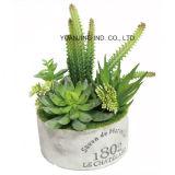 자유로운 작풍 Bonsai 플랜트 Succulents 세트 장식
