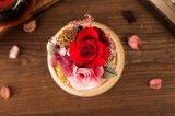 Ivenran preservó la flor fresca del rectángulo de música