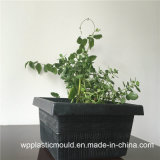 Flowerpot di plastica quadrato per la decorazione del giardino (HP-03)