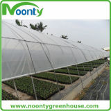 PE Material Pre-Stretch Perforated Resistente a los rayos UV Greenhouse Film Agriculture
