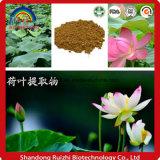 Extrait de feuille de lotus Extrait gratuit / poudre d'extrait végétal à partir de feuilles de lotus, de sérum Nelumbinis
