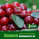 Fertilizzante organico: Potere dell'acido umico 50% di Humizone (HA50-P)