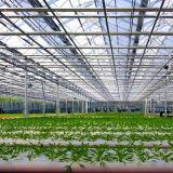 고품질 100%년 Virgin 물자 큰 유리제 농업 장비 온실