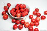 Extracto de Pinnatifida del Crataegus de la fruta del espino de la fábrica