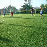 Grama natural do esporte da grama do futebol do relvado da grama