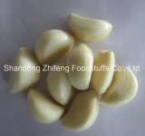 UK를 위한 새로운 Crop Fresh Peeled Garlic