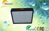 900W Vegetable Bloom Switchable Full Spectrum Painel LED Grow Light