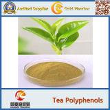 Massa naturale 60% EGCG, 98% L Theanine, polifenolo dell'estratto del tè verde del tè