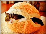 Base mullida del gato del picovoltio