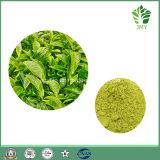 Heet verkoop het KruidenUittreksel EGCG van de Thee van /Green van het Uittreksel en Polyphenols van de Thee