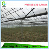 Invernaderos del túnel de la agricultura