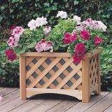 خشبيّة مزارع صندوق, خشبيّة زهرة صندوق ([م11-1095])