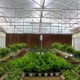 De Serre van de Plastic Film van Multispan voor het Plantaardige Groeien van de Bloem van de Komkommer van de Tomaat
