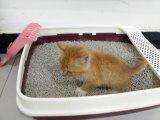 Graue Farben-Bambustofu-Katze-Sand/Sänfte mit der Aufhäufung
