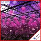 Leiden van de Bestseller 12W 24W E27 kweken Lichten voor Serre