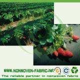 Protecteur Anti-UV dans le tissu non-tissé de pp pour la couverture d'agriculture