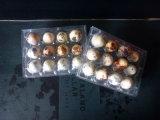 China claro de plástico PET bandejas de huevos de codorniz huevos