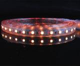 건물 훈장을%s 고전압 LED 지구 SMD 5050 RGB