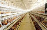 De Bouw van het Staal van de Structuur van het Staal van het Landbouwbedrijf van de kip