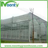 Стеклянный парник для растущий овоща и цветков