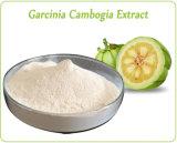 60% Hca Perte de poids en poudre Garcinia Cambogia Extrait