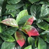 Seto artificial del boj del Topiary de la cerca verde plástica de la hoja