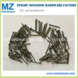 Q195 Bwg3-20 Bright Polish Galvanized Common Iron Wire Nail