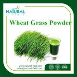 100% natürliches Weizen-Gras-Puder