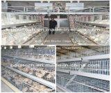 Оборудование клетки цыпленка бройлера с хорошим качеством & ценой для фермы цыпленка (типа рамка)