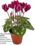 Flowers artificiale di Cyclamen Gu-Lj-10L-8fa