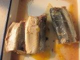 Makreel in de Hete Verkoop van de Tomatensaus 425g/Ingeblikte Vissen