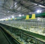 Casa de galinha material industrial da vertente da exploração avícola do projeto da construção de aço
