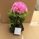 Piante e fiori di plastica artificiali di piccole piante Gu201705 dei bonsai
