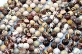 자연적인 얼룩말 돌은 크기 6을 8개의 10의 12mm 분리한 얼룩말 돌 원석 가격 좌초시킨다