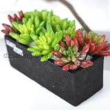 Plante décorative Natural Touch Artificial Succulents Artificial Flower (SW17674)