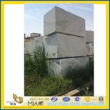 Castro White Marble Slab per Floor & Wall Tiles (YYL)