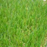 Искусственное Lawn для Kindergarten Bsb-20f-416-BS