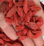 Bacca organica rossa del lupo del Ningxia secca nespola