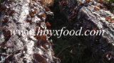 agarico saporito dell'orecchio della nube di 0.7-3cm