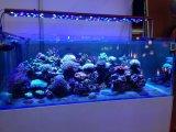 산호초 성장을%s 풀그릴 48inch 240W LED 수족관 점화