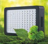 고성능 LED는 나물과 야채를 위해 가볍게 증가한다