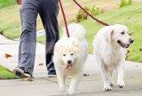 اثنان - طريق جديلة نيلون لا مشتبك يثنّى كلب رباط لأنّ 2 كلاب يمشي تدريب