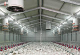 Price poco costoso Chicken Farm Steel Buildng da vendere