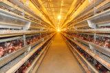 Equipamentos de exploração agrícola fêmeas da galinha das galinhas de China