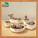 Land Style Ceramic Succulent Pot mit Baboo Stand